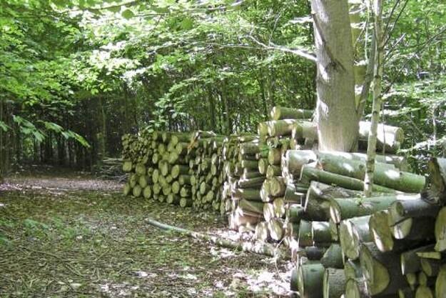 Fremtidens skov skal både have produktionsmæssige og rekreative værdier.