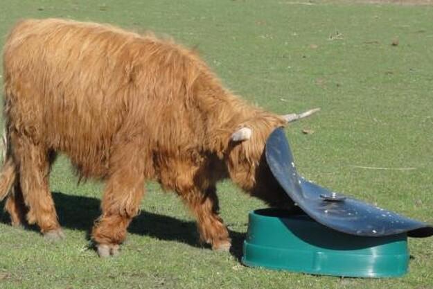 Mineralfoderautomaten er velegnet til besætninger af får og kvægracer som for eksempel skotsk højland.