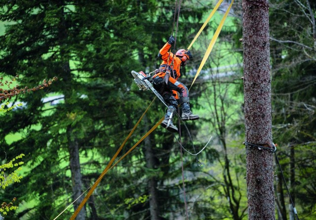 Godt nyt for skovfolket
