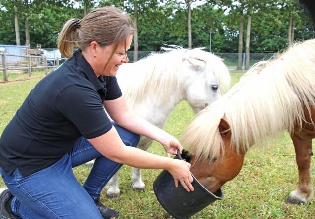 Økologisk foder hitter hos hesten