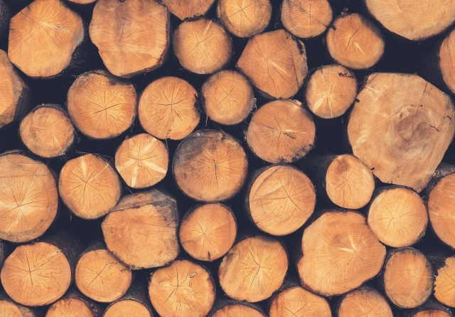 Husk tilskud til skovrejsning