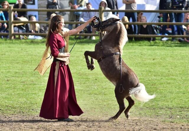 Over 1.000 heste til bedømmelse