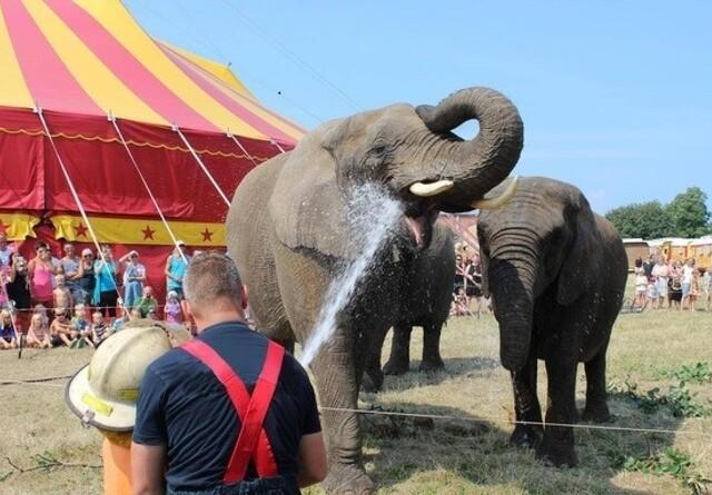 Vil redde cirkus-elefanter
