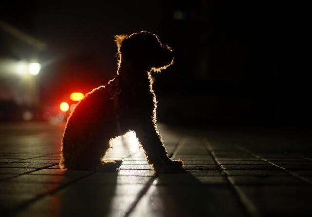 Reflekser redder hundens og kattens liv