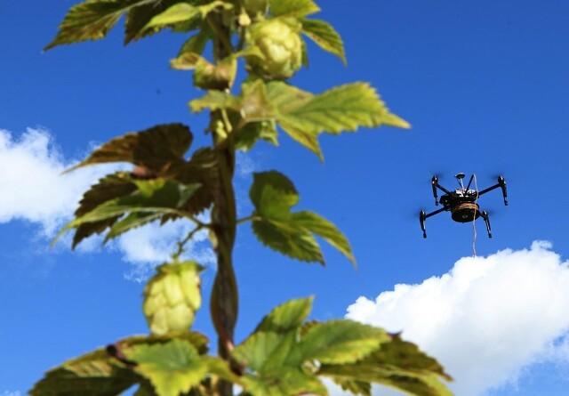 Øl-drone skal klippe humlen