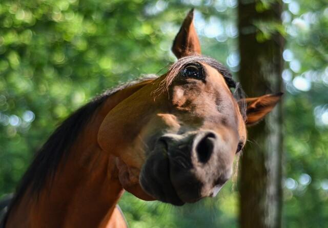 Ved du det her om din hest?