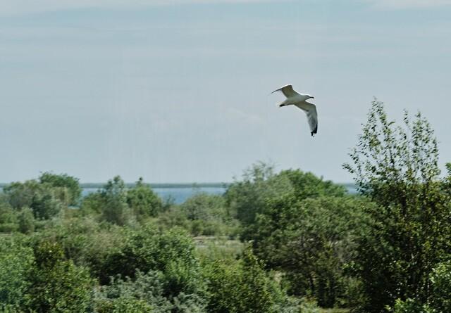 Peberholms fugleliv på kraftig tilbagegang