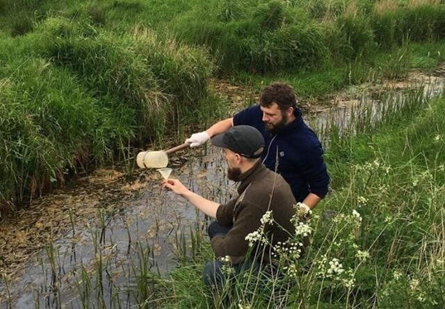 Jagt på DNA fra sjælden musling