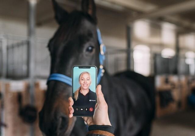Nu kan du få dyrlæge-tjekket din hest via mobilen