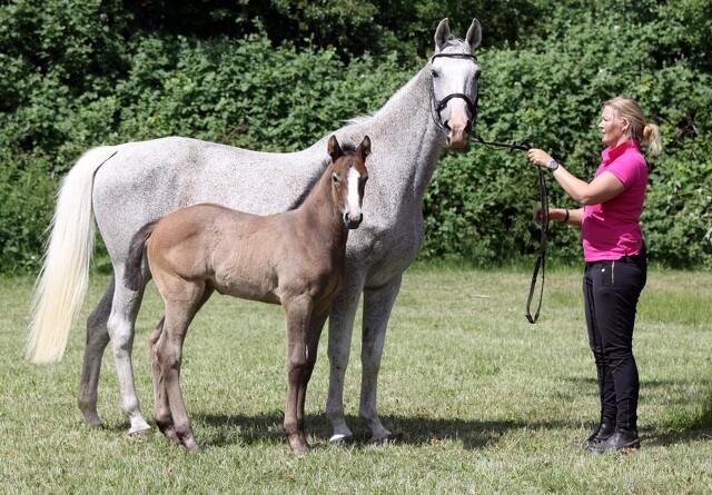 Slagsmål med Skat sætter stopper for hestedrøm