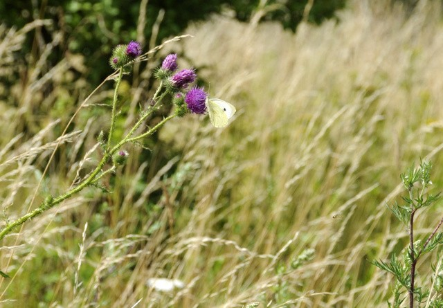 Lokale arter på retræte i naturen