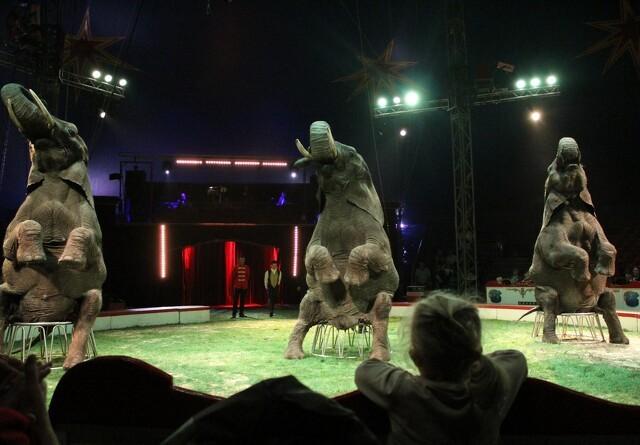 Staten overtager cirkuselefanter