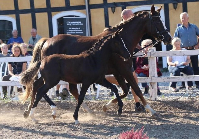 Slagsmål med Skat lukker endnu et hestestutteri