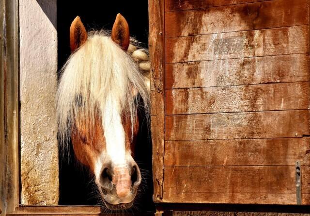 Nu er det bevist: Heste kan åbne døre og låger