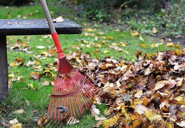 Bevar nedfaldne blade i haven