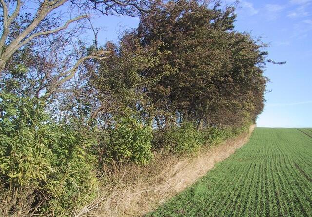 Rod i læhegnet gavner biodiversiteten
