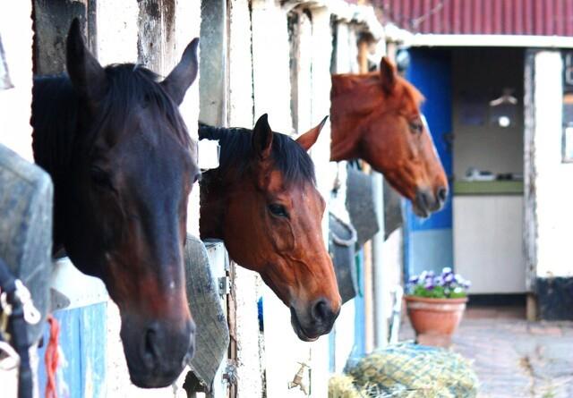 Ekspert: Derfor går hestestutterier i skattefælden