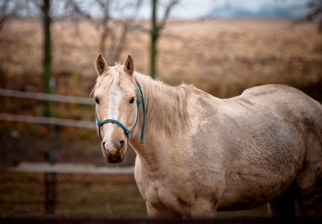 Skal hesten klippes eller ej?