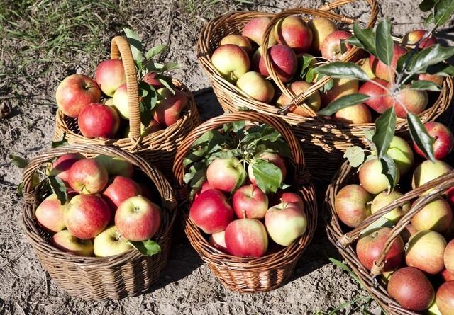 Færrest pesticidrester i dansk frugt og grønt
