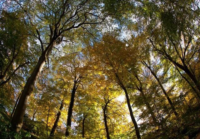 Urørt skov får millioner