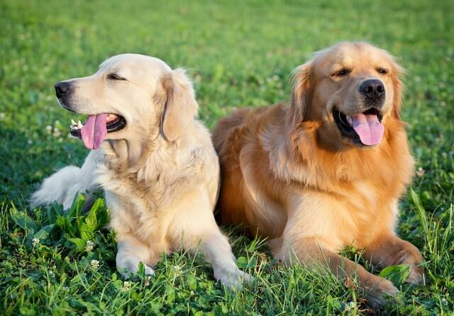 Din hund er ikke så gammel, som du tror