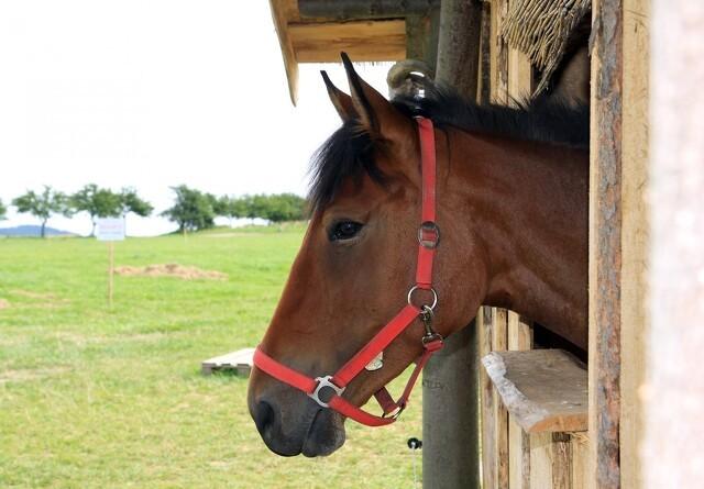 11 overraskende ting om din hest