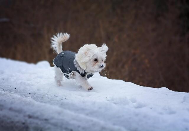 Er din hunds pels tyk nok til vinteren?