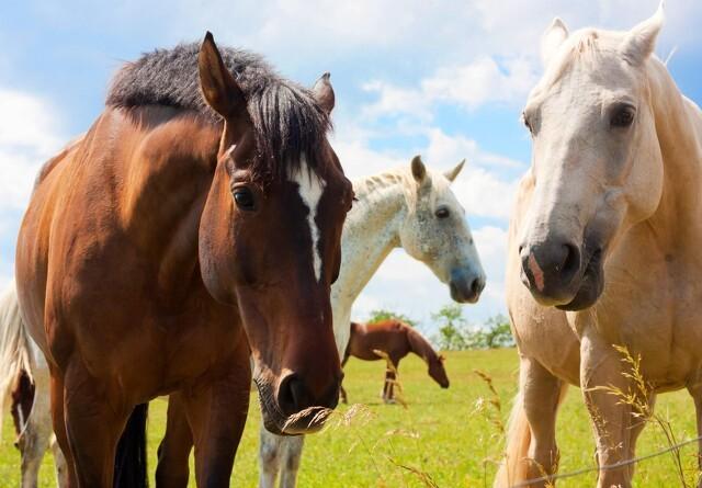 Her er de mest populære hestenavne i 2019