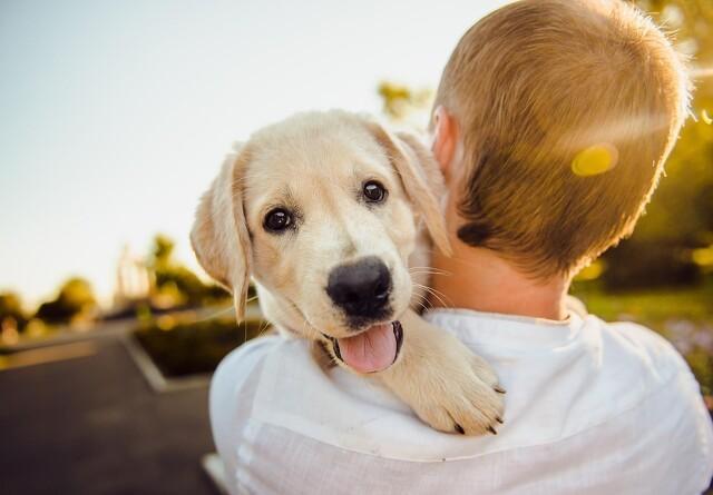 Kæledyr gør os lykkelige