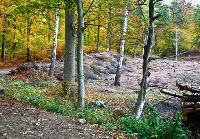 Coop vil åbne 10 nye folkeskove