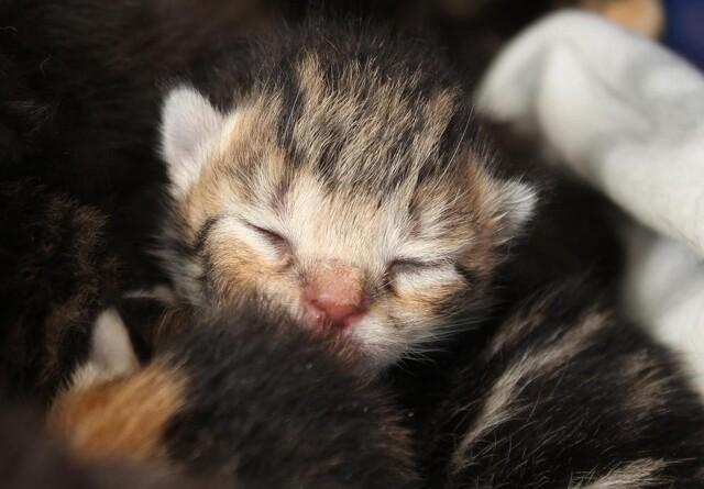 Trist udvikling: Katte dumpes i stor stil