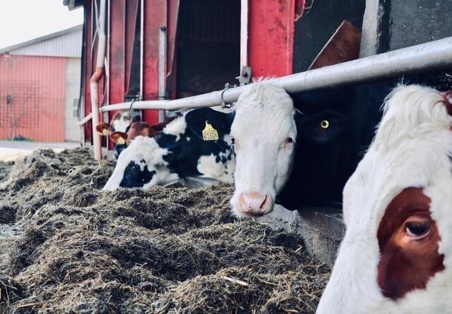 Ny mælk fra fremtidens landbrug
