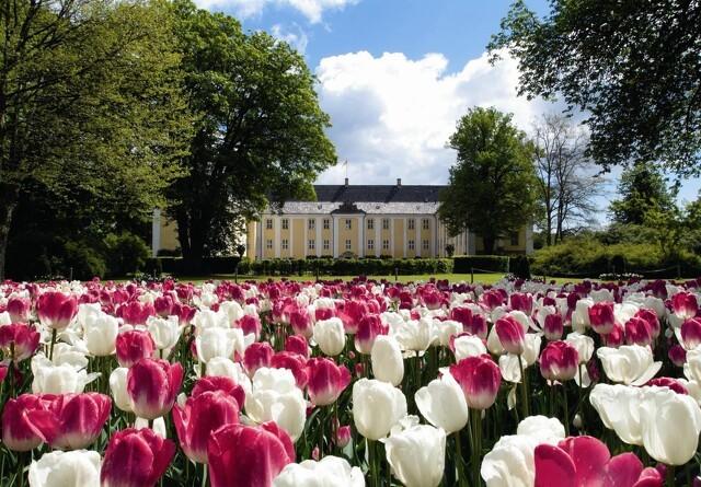 Danmarks største Tulipanfestival blomstrer