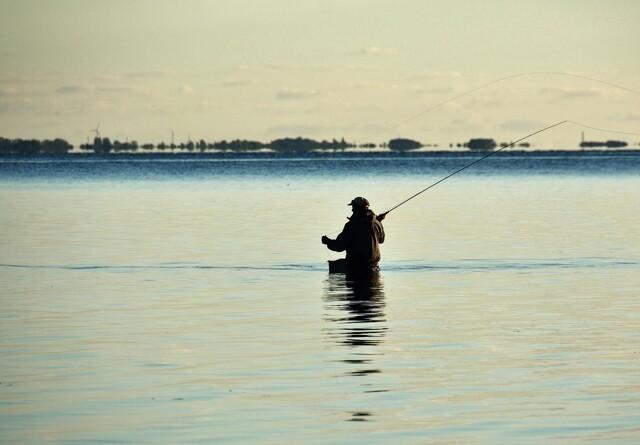 Mange fisker uden fisketegn