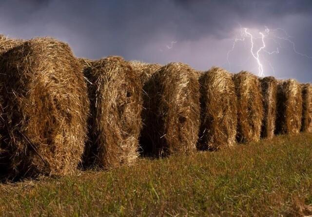 Lyn kan give store ødelæggelser i landbruget
