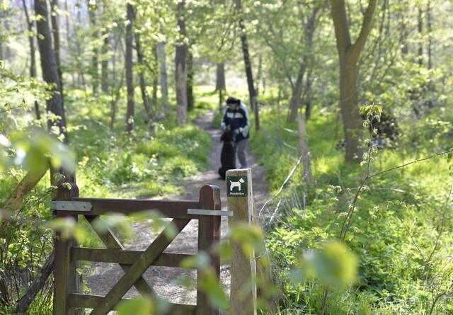 Sådan finder du den nærmeste hundeskov
