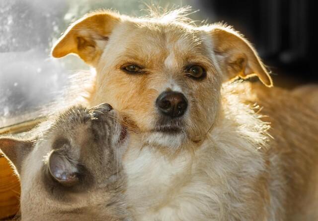 Dårlig opførsel sender ikke kæledyr til internatet