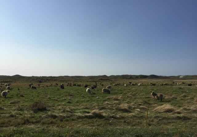 Vandrende hyrder indstillet til miljøpris