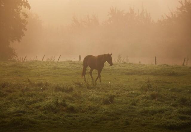 Sådan undgår din hest muk i det våde efterår