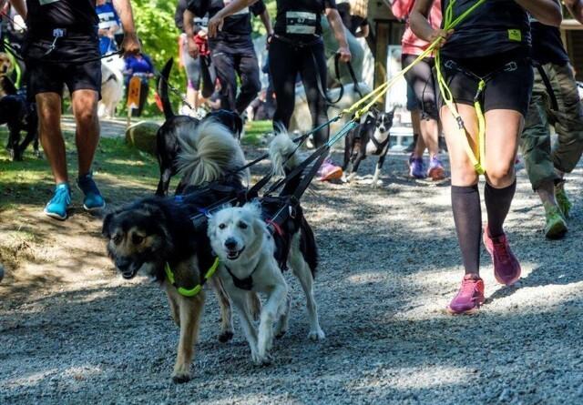 Det skal du vide, før du løbetræner med din hund