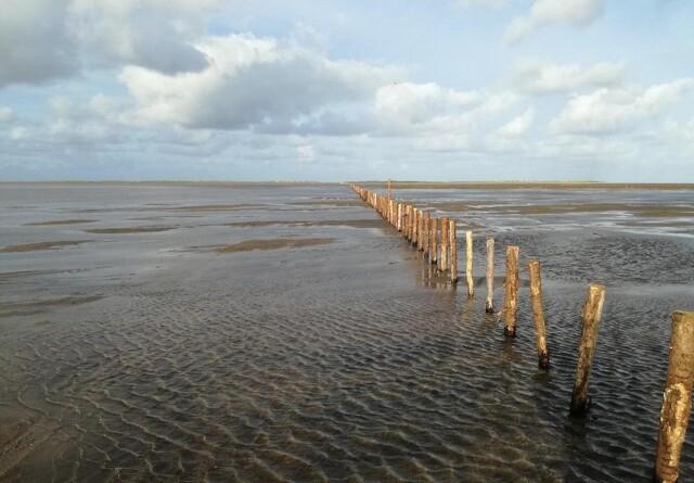 Naturen får frit spil på Rømø