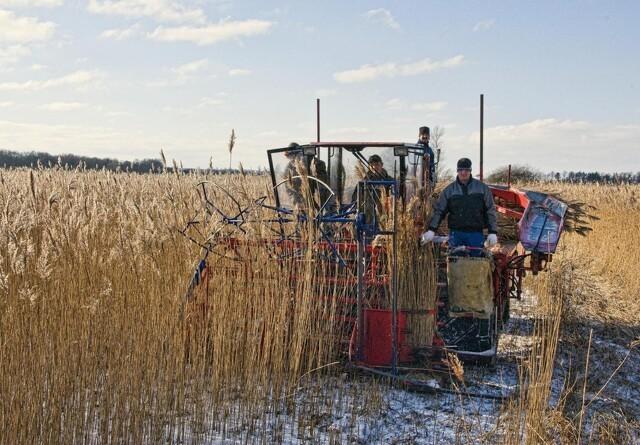 Høst til stråtag fremmer insektlivet