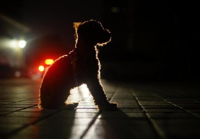 Husk reflekser og lys på gåturen
