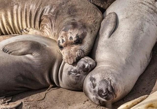 Sæler og makreller skal reddes fra tobis-trawl