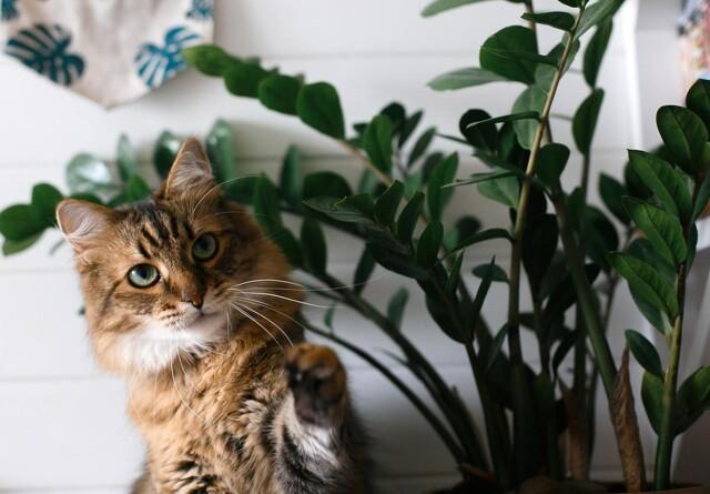 Planter og blomster som katten ikke kan tåle