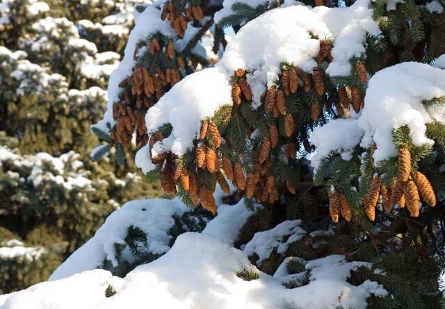 Naturen er et tag-selv-bord af julepynt