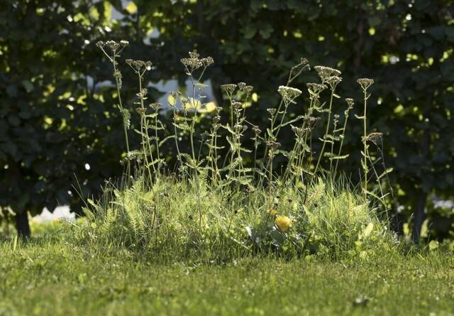 Danske haveejere er dus med den vilde natur