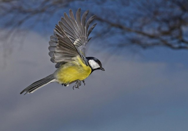 Pas på fælder når du fodrer havens fugle
