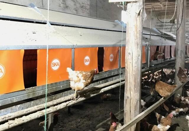 Nye redekasser til økologiske høns