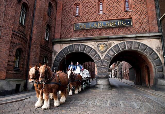 Carlsbergs bryggerheste er flyttet i ZOO